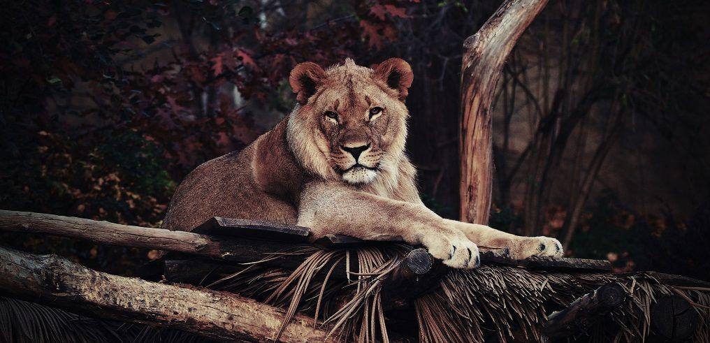Талисманы для Льва: подходящие и неподходящие камни