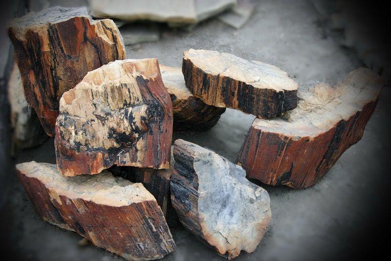 Мир минералов: окаменелое дерево