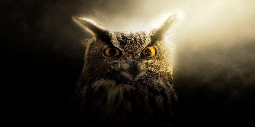 Талисман сова: что означает и кому подойдет амулет с ночной птицей