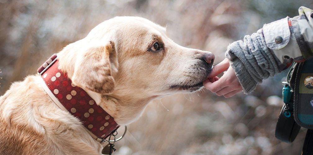 Оберег для собаки: как защитить своего питомца