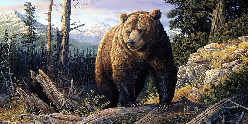 Значение амулетов Чертог медведя, Медвежий коготь, Зуб медведя